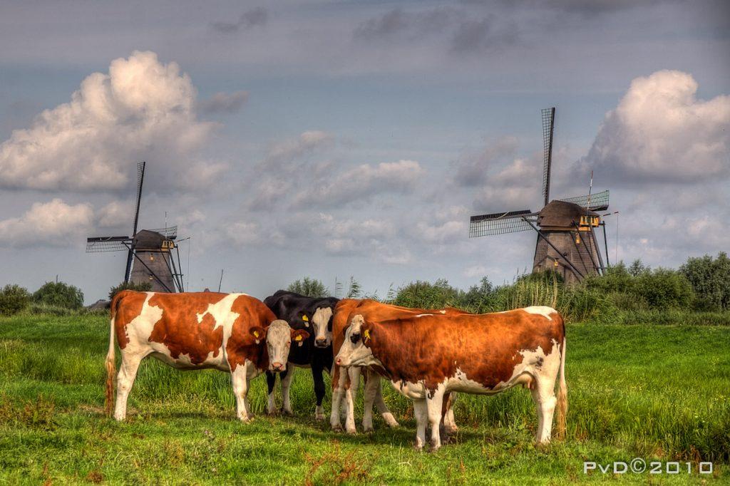 Kinderdijk - Gemeente Molenlanden